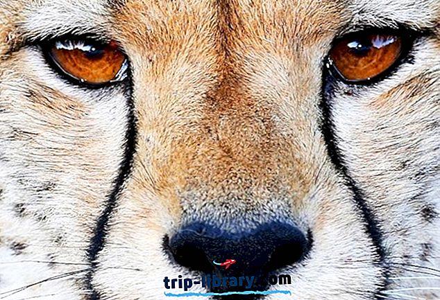 10 mest populære turistattraktioner i Bloemfontein