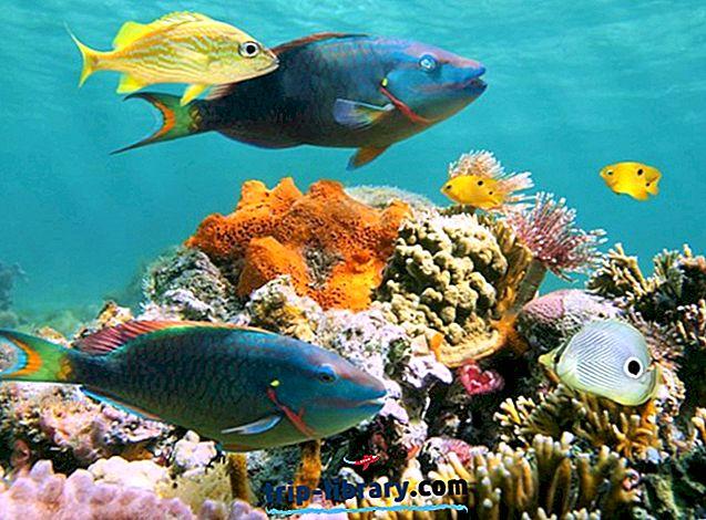 10 atracciones turísticas mejor valoradas en Cozumel