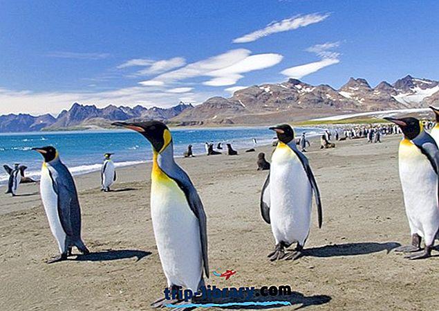 フォークランド諸島の11の人気観光スポット