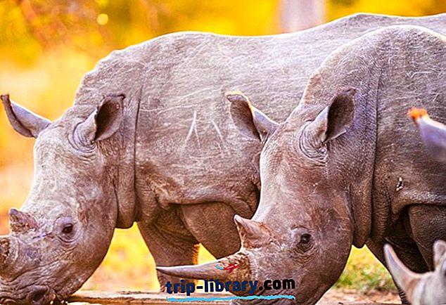 أعلى 10 مناطق الجذب السياحي في الدولة الحرة ومبومالانجا