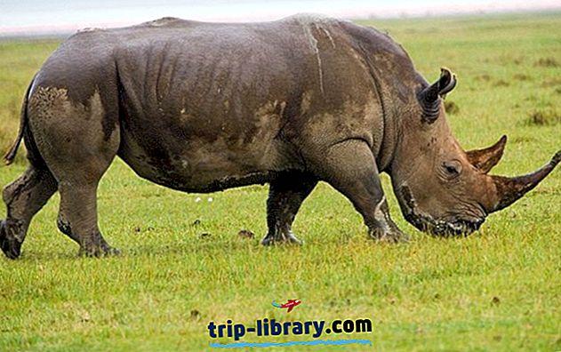 10 Topprankade turistattraktioner i Gauteng och North West Province