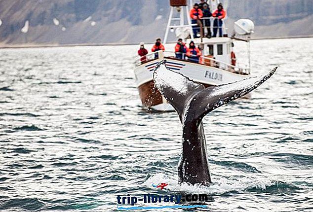 18 Topprangerte turistattraksjoner på Island