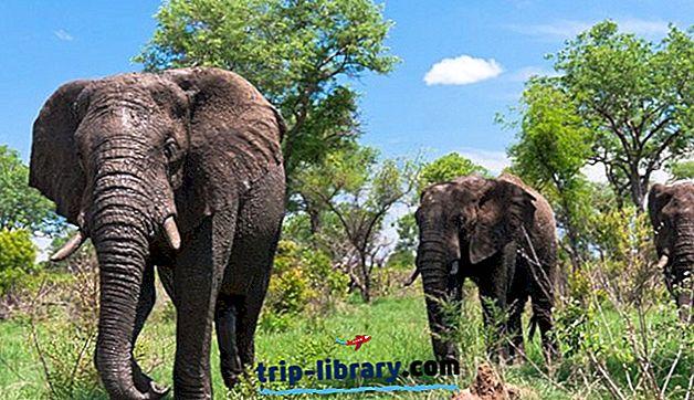 12 найкращих туристичних визначних пам'яток Південної Африки