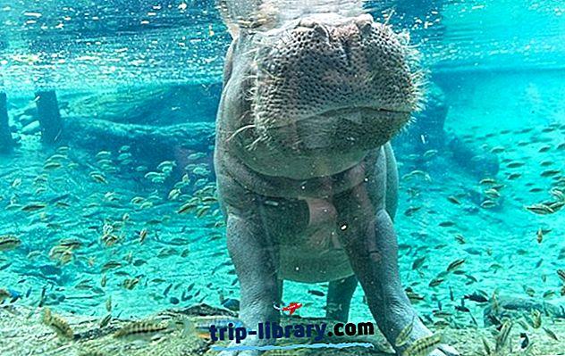12 parimat turismiobjektit Tampa linnas