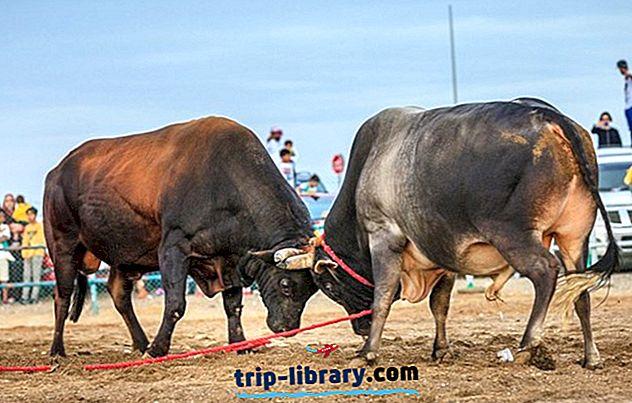 Ταύρος αρσενικό χρονολογείται ταύρος θηλυκό