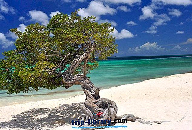 Aruba bölgesindeki en iyi 10 Plajlar
