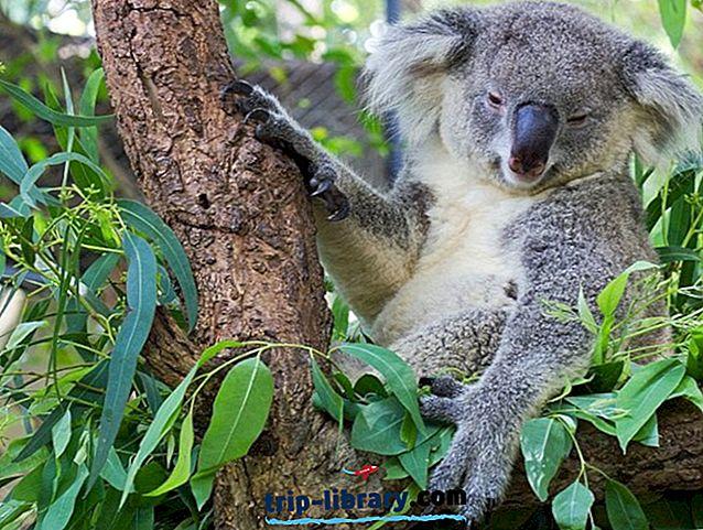 Brisbane mit Kindern: 12 Top-Aktivitäten