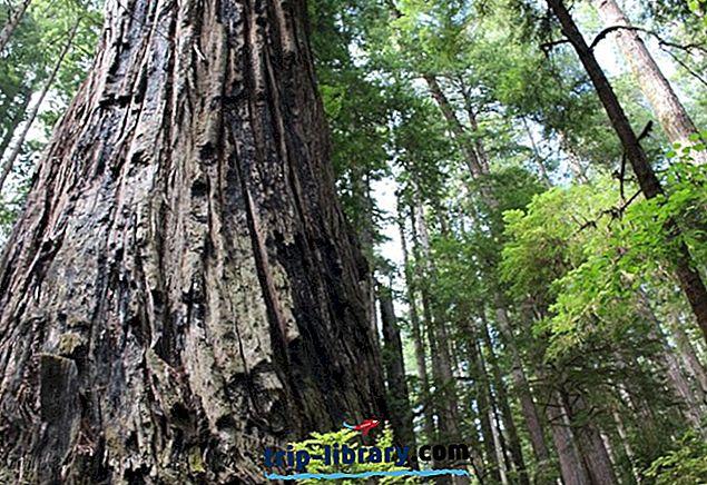 6 parasta leirintäaluetta Redwoodin kansallisissa ja valtion puistoissa