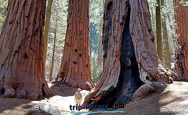 6 Nejlepší Kempink v Sequoia National Park