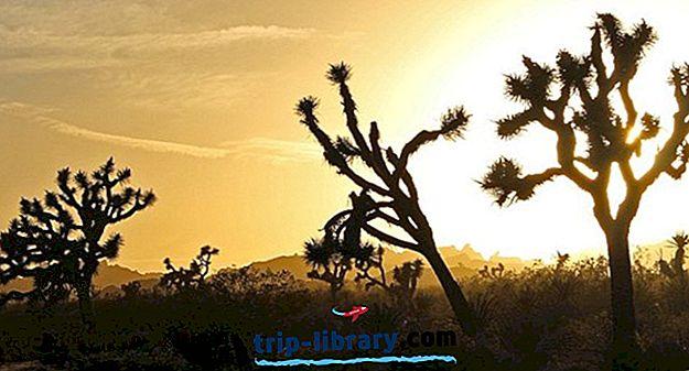 9 Zábavné aktivity v národním parku Joshua Tree: Výlety, památky a aktivity