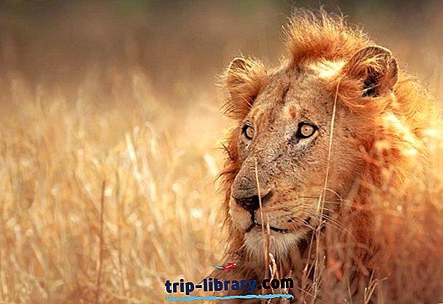 クルーガー国立公園の観光情報
