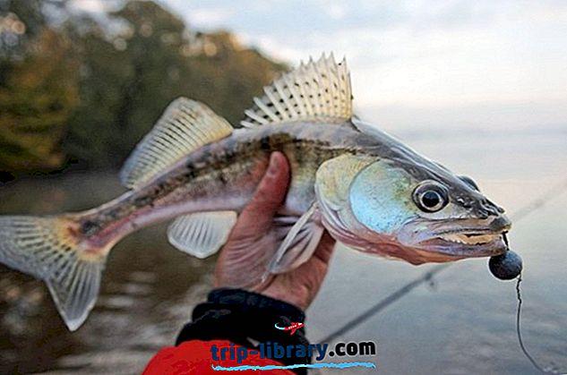 12 labākie makšķerēšanas ezeri Ohaijā