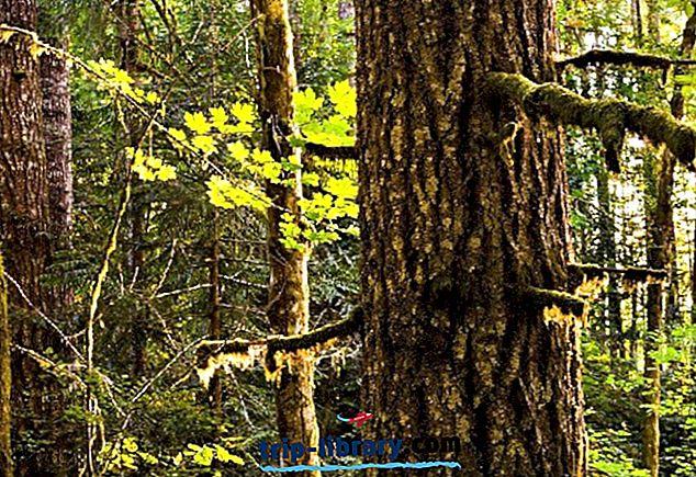 12 Top-bewertete Campingplätze in der Nähe von Portland