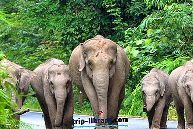 カオヤイ国立公園の観光:ビジターガイド