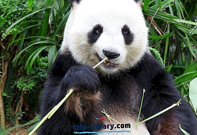 21 populārākās atrakcijas Chengdu & Easy Day Trips