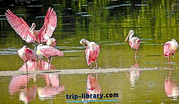 9 Nejlépe hodnocené atrakce a zajímavosti na ostrově Sanibel