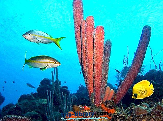Bonaire, Saba ve St Eustatius'daki 12 Popüler Turistik Yer