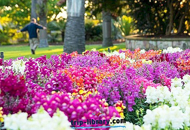 besplatna stranica za upoznavanje Brisbane kolona za druženje sa suncem