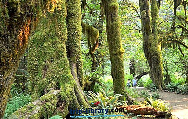 12 bestbewertete Campingplätze im Olympic National Park