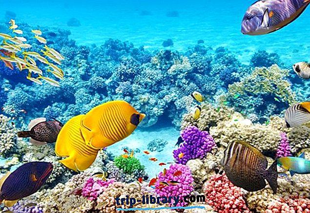 14 أفضل أماكن للسباحة بأنبوب التنفس في العالم