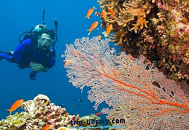 10 Top-bewertete Sehenswürdigkeiten und Aktivitäten in Port Douglas
