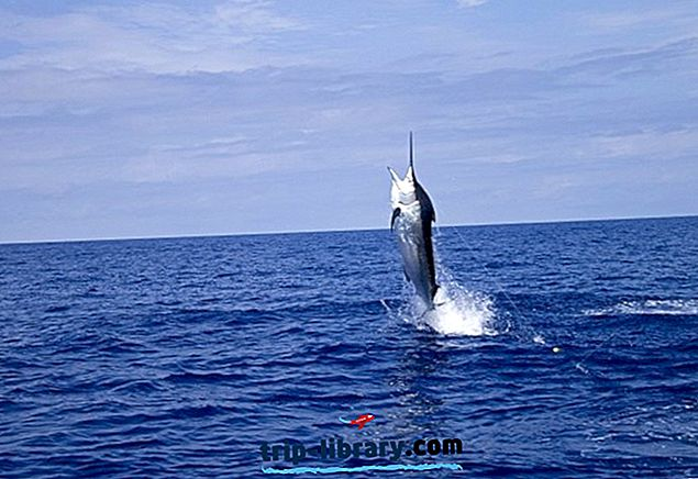 10 Nejlépe hodnocené rybářské cíle v Austrálii