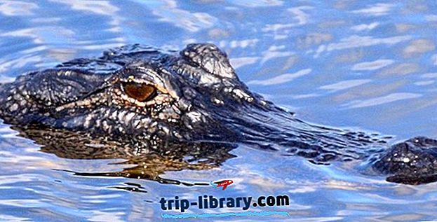 Najlepšie hodnotené turistické atrakcie a atrakcie v Lake Charles