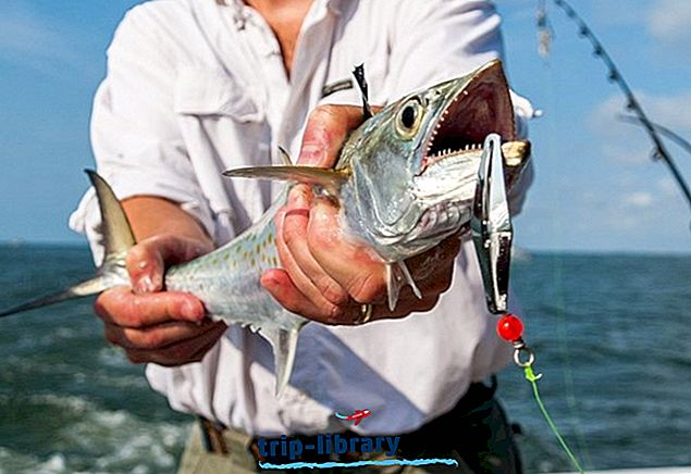3 topprangerte steder for Deep Sea Fishing i South Carolina