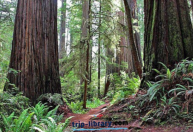7 najboljih šetnji u Redwood nacionalnim i državnim parkovima